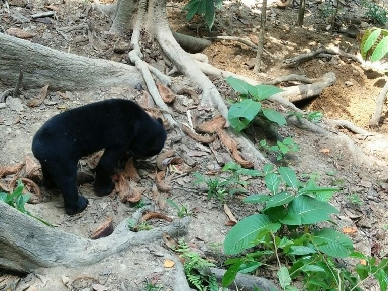 Five sun bears at conservation centre adopted