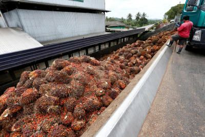 Palm oil extends rally to near record as supply outlook tightens