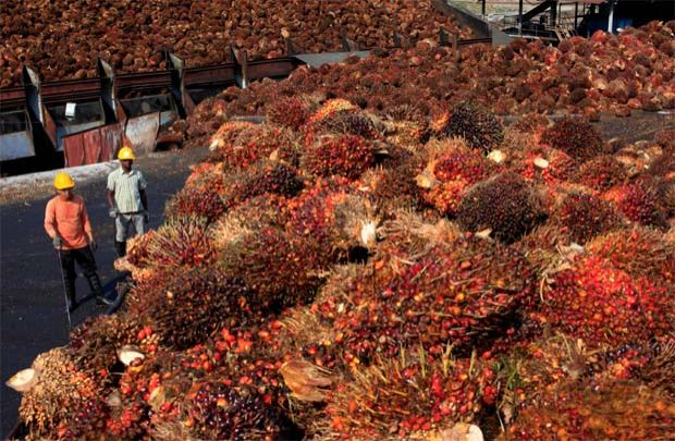Agri-commodities exports jump 65% to RM105b in 2Q